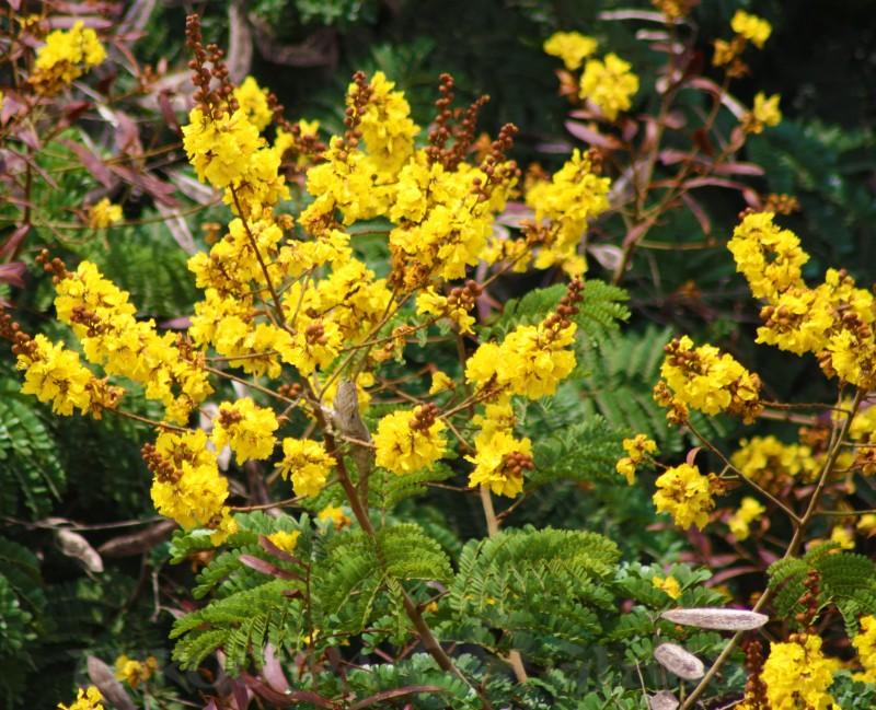 V,Wednesdayvibrant,nature,flowers,abc,wordless,pravin,phenomenon,pm,throo da looking glass,bangalore blog