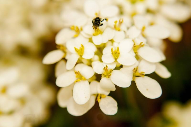 white petals,flowers,nourishment,golden,karnataka,praveenn,phenomenon,pm,throo da looking glass,bangalore blog
