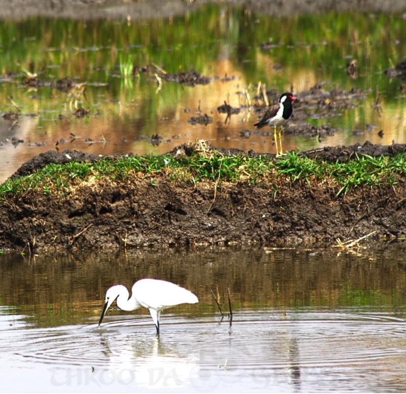 critter,black,white,birds,hampi,karnataka,praveen,throo da looking glass,phenomenon,pravs,matter,bangalore,blog,heron