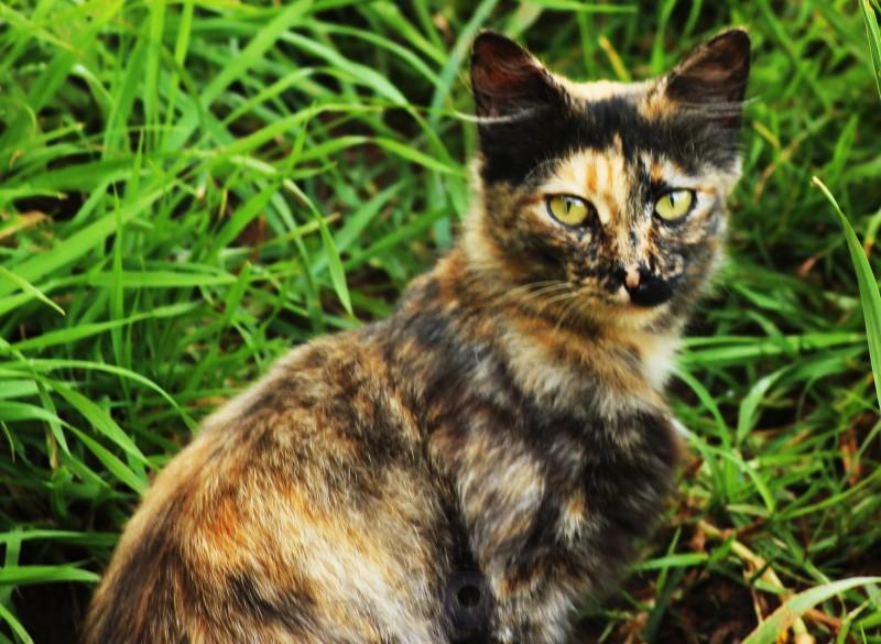 cat,critter,saturday,praveen,pravs,through the looking glass,throo da looking glass,phenomenon,bangalore,blog