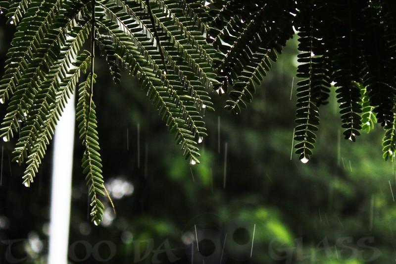 drops,rain,praveen,throo da looking glass,through the looking glass,bangalore blog