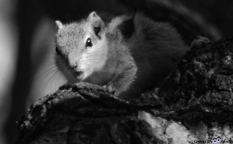 squirrel,critter,chipmunk,food,life,haiku,scamper,search,praveen,through the looking glass,throo da looking glass,phenomenon,bangalore,blog