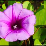 Violets – Day 357